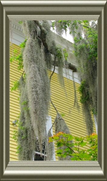 Savannah Moss by lindin