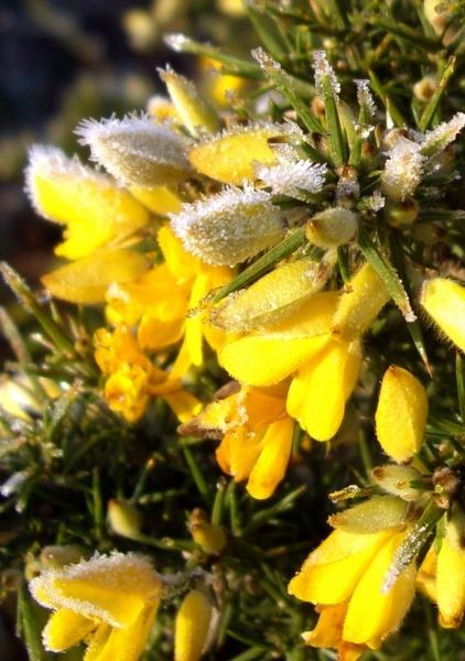 Frozen Flowers by bugman293371