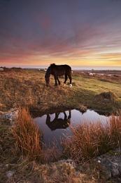 Horse on Bodmin Moor