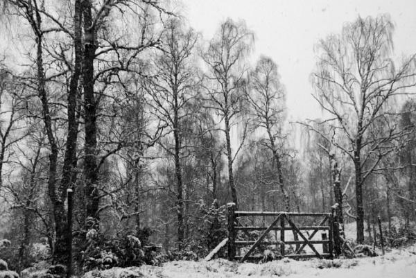 snow gate by dragarth