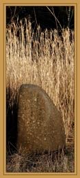 Rock & Reeds