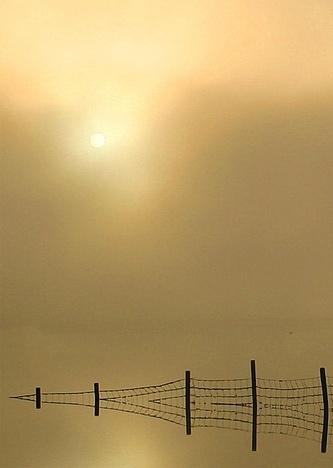 misty morning by davidcollins