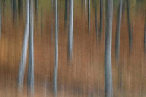Woodland scene by Mikebr