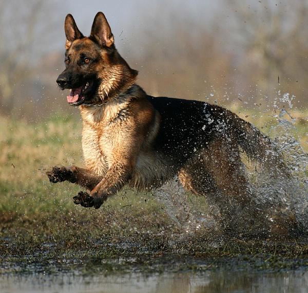 Splash! by KJackson