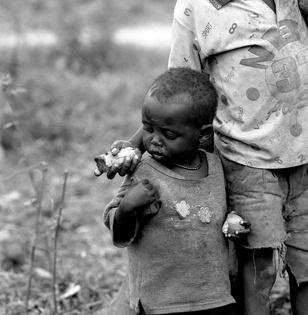 Sugarcane by uganda
