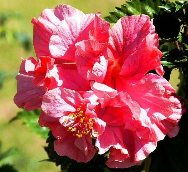 Flower by leons29