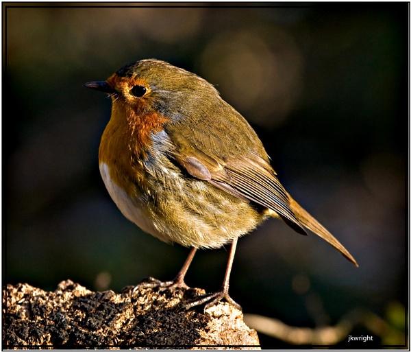 robin by fishy2