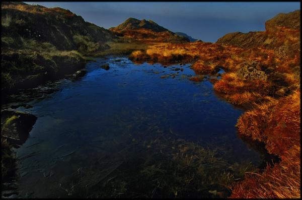 A bog pool Sleeve Foy by Fisher2