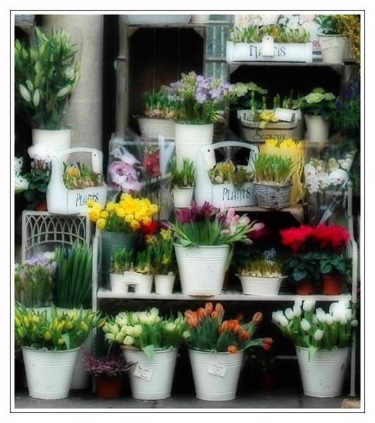 The Art of the Florist by Ukulele_Lady
