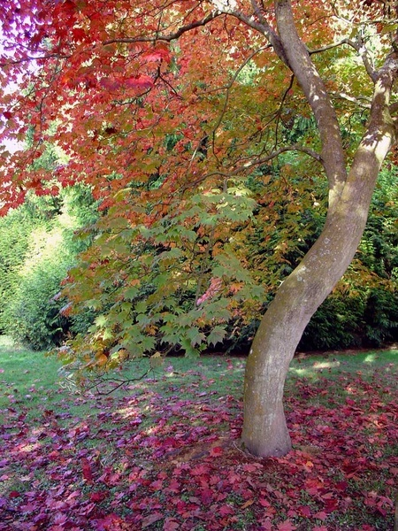Autumn at Westonbirt by angelica_cab