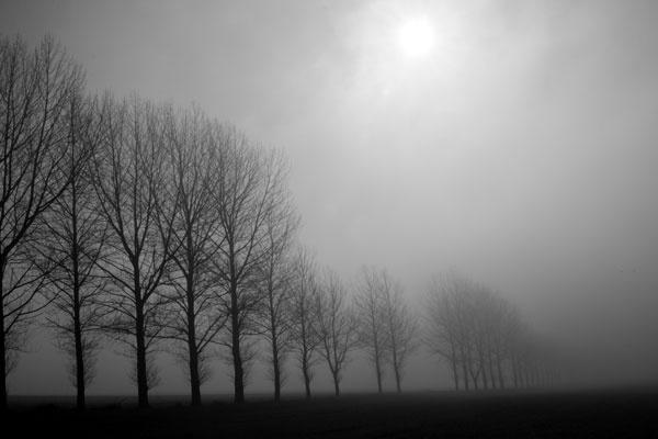 vanishing trees