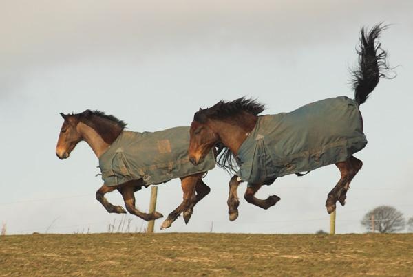 Flying Horses by funkymaggot