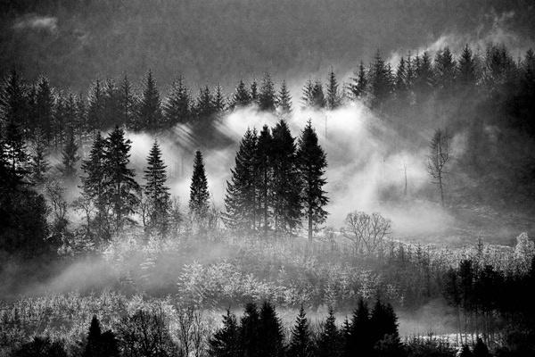 Misty Aberfoyle by carrot_heid