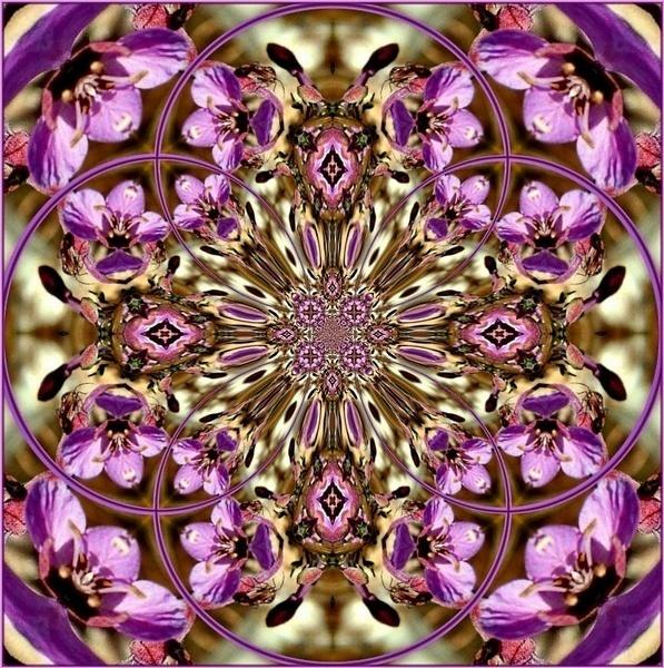 Kaleidescope Floral by AnneWorner
