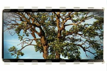 Just a tree by adgvelazquez