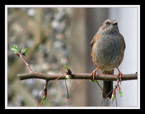 Name that bird! by whoami2b