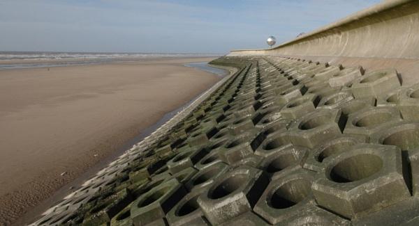 Beach nuts by Birdseye