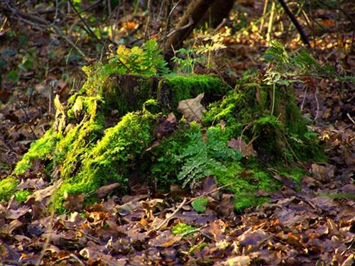 Tree Stump by WilliamRoar