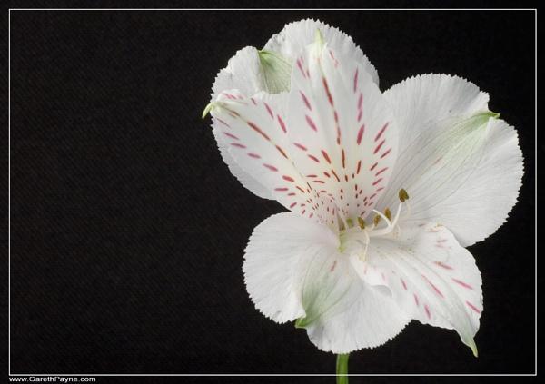 Flower by gareth01422
