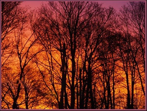 Good Morning by ImageryOne
