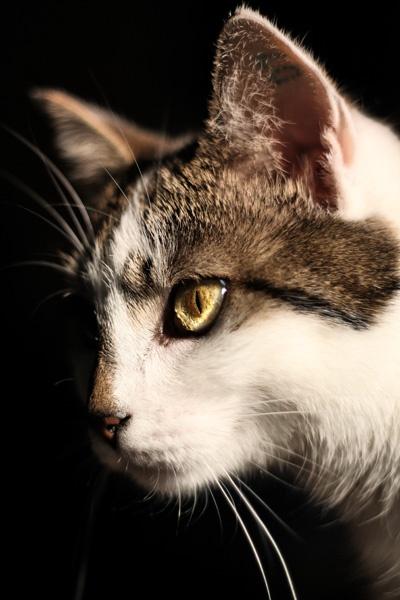 Cat portrait by ClaudiJay