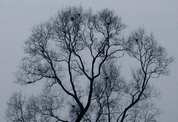 Tree in Winter Mist by Amal