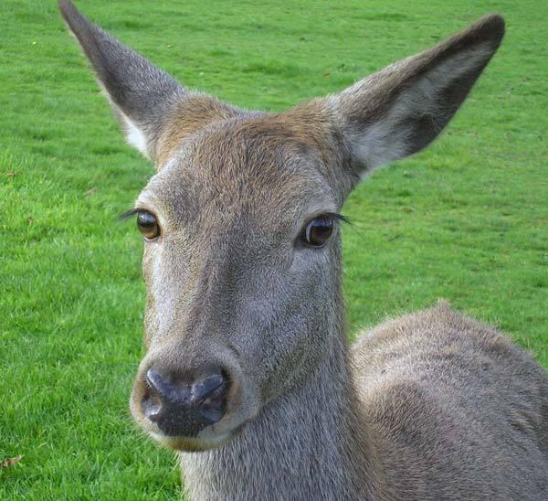 deer by ducatifogarty