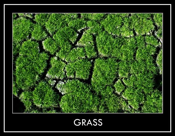 Grass by Farris