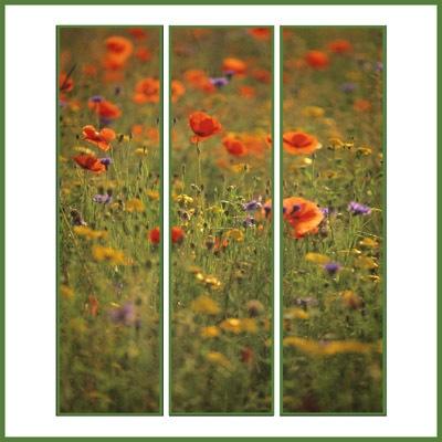 flower meadow by PeeCee