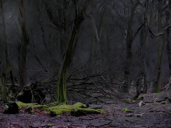 under the trees by starliz