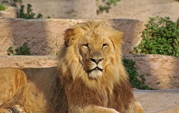 King by brayzo