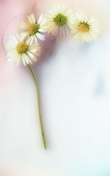 Painterley by imagio