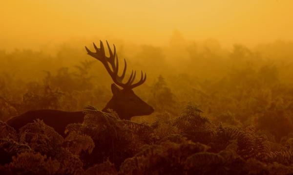 Stag at Dawn by Trogdor