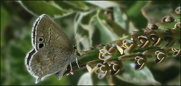 little flutterbye by MaryMac