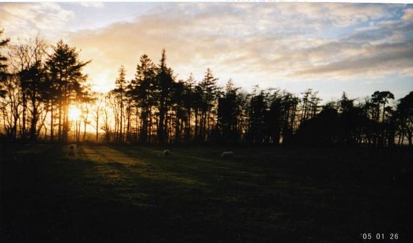 sunsetfield by jennyk