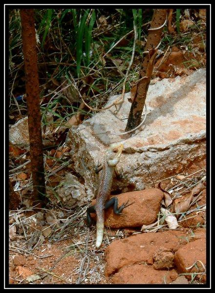 chameleon by yelnats