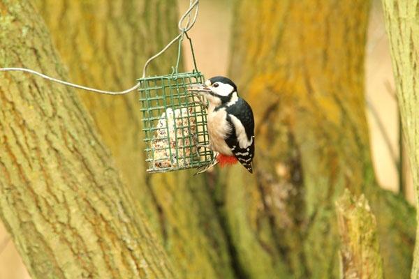 Woodpecker by brownbear1991
