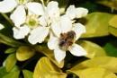 summer bee,s