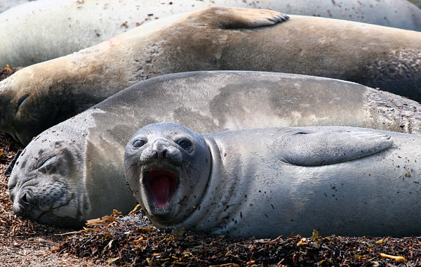 Seal of Disapproval by matt adams