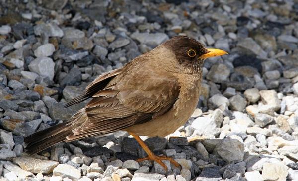 Unidentified Bird by matt adams