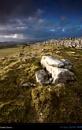 Settle'd Stone ... by sut68