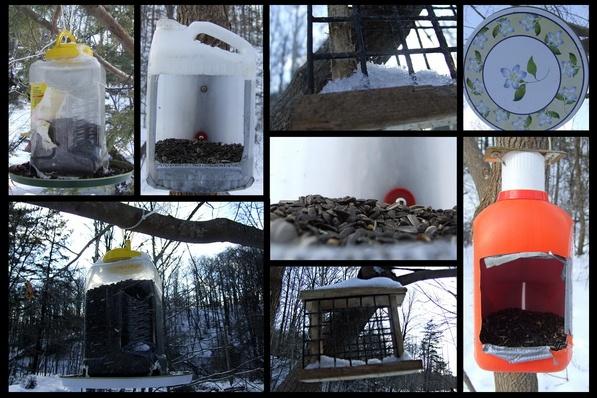 Edward Gardens Bird Feeders by silvina