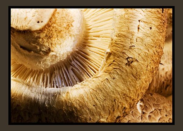 Mushroom by boiledegg