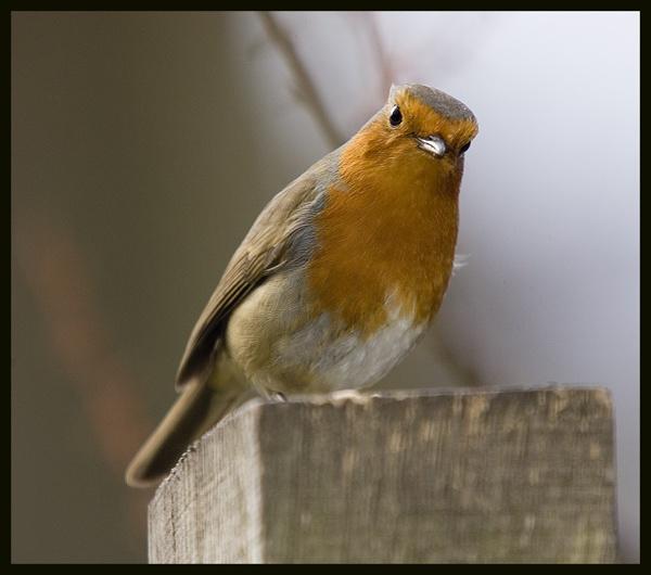 Watch the birdie by rickie