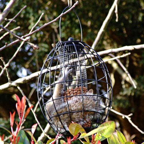 Squirrel proof?? by Cephus