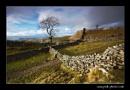 The Settle Tree by richardwheel