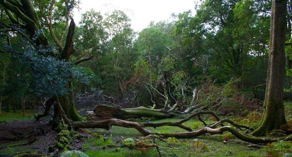 Falling Trees by yasika