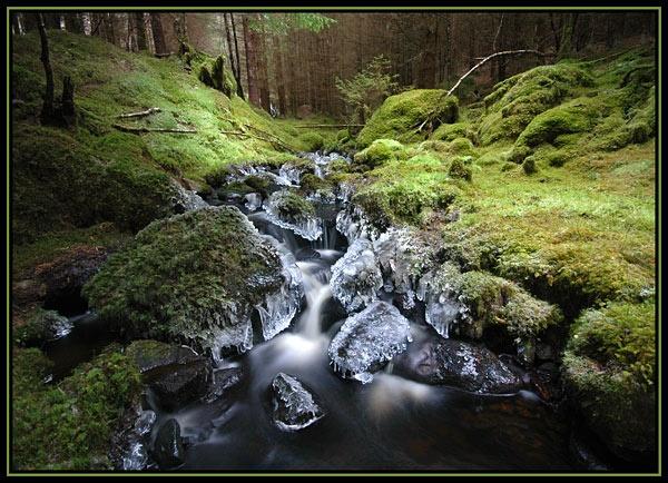 Enchanted Forest by u47sb2