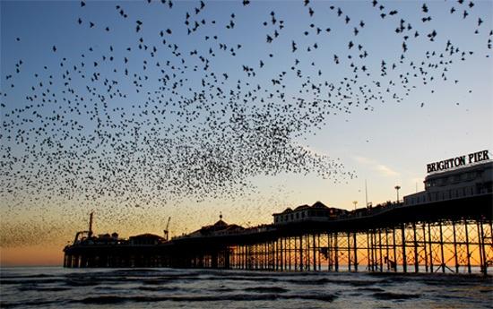 Brighton pier by Pornrutai