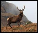 Glen Etive stag by v8dunc